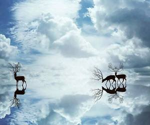 sky, nature, and animals image