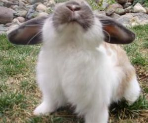 baby animals, bunny, and cute animals image