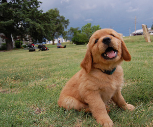cute, dog, and photography image