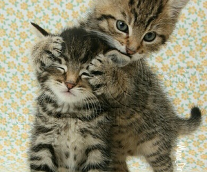 adorable, guess who, and kittens image