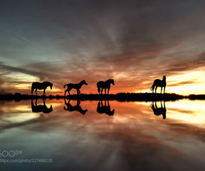clouds, horses, and landscape image