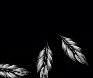 black, feather, and background image