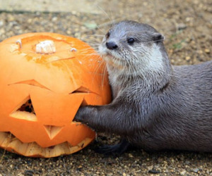 animals and Halloween image