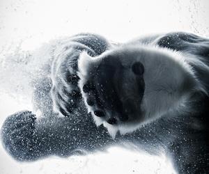 bear, photo, and white image