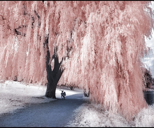 pink and photography image