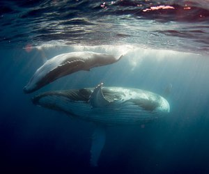 whales image
