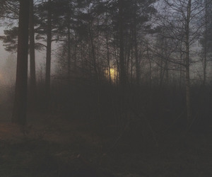 dark, forest, and alternative image