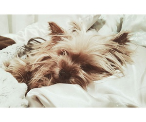 bliss, good morning, and yorkshire terrier image