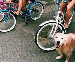 dog, hipster, and summer image