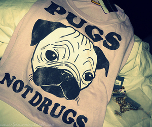dog, pug, and drugs image