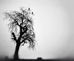 black and white, black birds, and creepy image