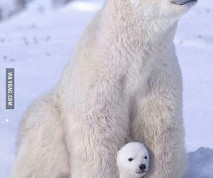 arctic, cold, and mother image