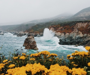 flowers, sea, and landscape image