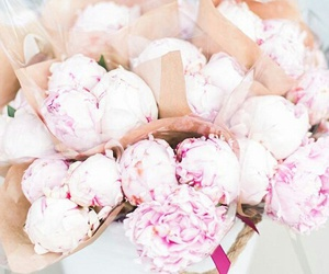 beautiful, flowers, and peony image