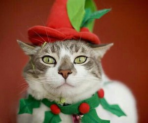 cat, christmas, and red hat image