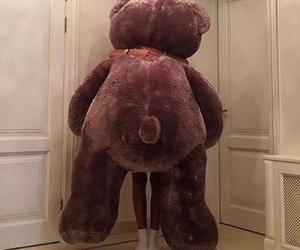 bear, gift, and big image