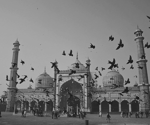 architecture, b&w, and bird image