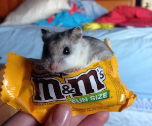 adorable, hamster, and happiness image