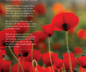 poppy, remembrance day, and november 11 image