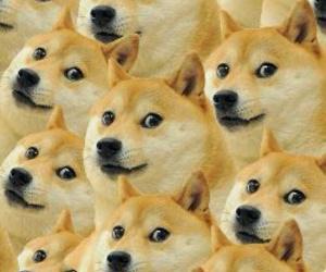 dog, doge, and background image