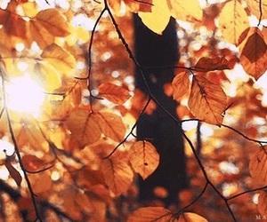 autumn and sun image