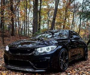 autumn, black, and bmw image