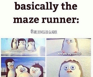 maze runner, funny, and the maze runner image