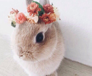 flower, cute, and rabbit image