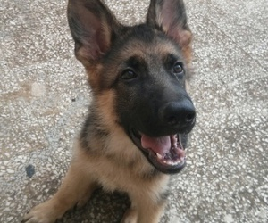 cuccioli, dog, and dogs image