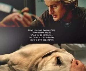 dog, marley, and movie image