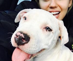 miley cyrus, dog, and miley image