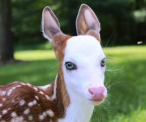 albino, deer, and bambi image