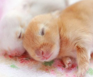 bunny, rabbit, and baby image