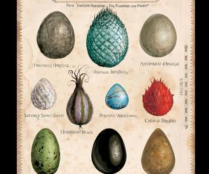 dragón, eggs, and harry potter image