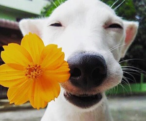 dog, flower, and cute image