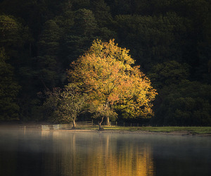 autumn, fall colors, and tree image