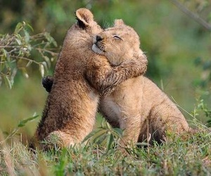 happines, sweet, and lion image