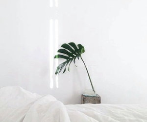 white, plants, and aesthetic image
