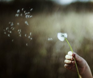 dandelion, photography, and wind image