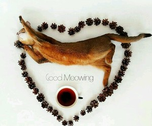 cat, morning, and good image
