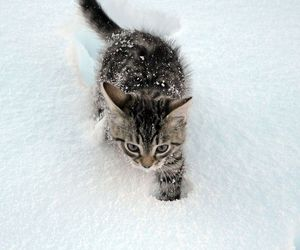 cat, snow, and kitten image