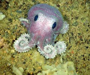 animals, octo, and sea image