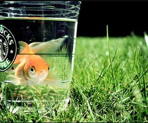 fish, starbucks, and water image
