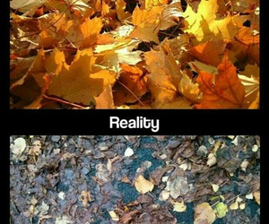 funny, autumn, and reality image