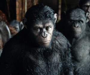 apes, blue eyes, and cesare image