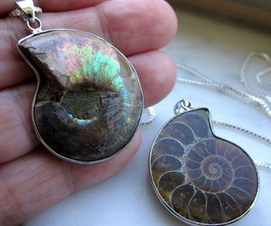 shell jewelry, fossil jewelry, and ammonite pendant image