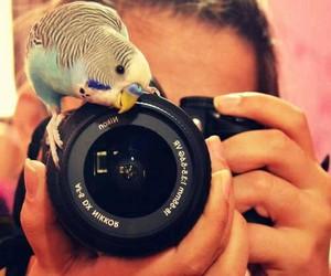 camera and bird image