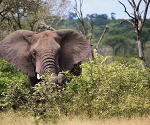 elephant and south africa image