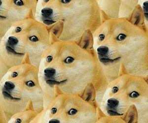 Dog Doge And Background Image