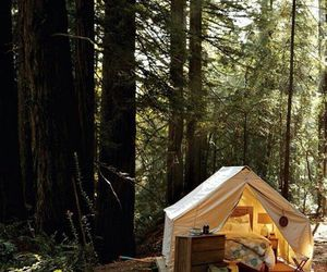 forest, camping, and bed image